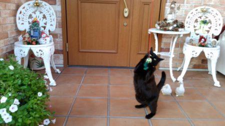▲元が野良なので外が大好きななっちゃん。稲留家には前からいた先輩猫2匹+なっちゃんで3匹の猫がいます