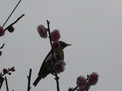 20110318_02.jpg
